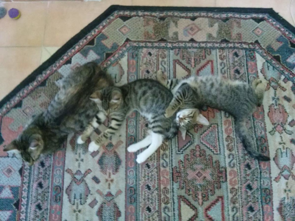 2015-06-06 Lotto and her two kittens