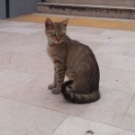 2015-06-10, Big-eyed female tabby 02