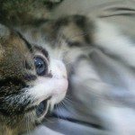 "A new life for ""Mare"", the little kitty"