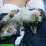 Mare the kitten sleeping, 2015-09-17-03