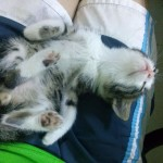 Mare the kitten sleeping, 2015-09-17-04