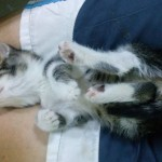 Mare the kitten sleeping, 2015-09-17-08