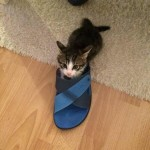 Mare the kitten with his new family 01