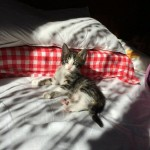 Mare the kitten with his new family 02
