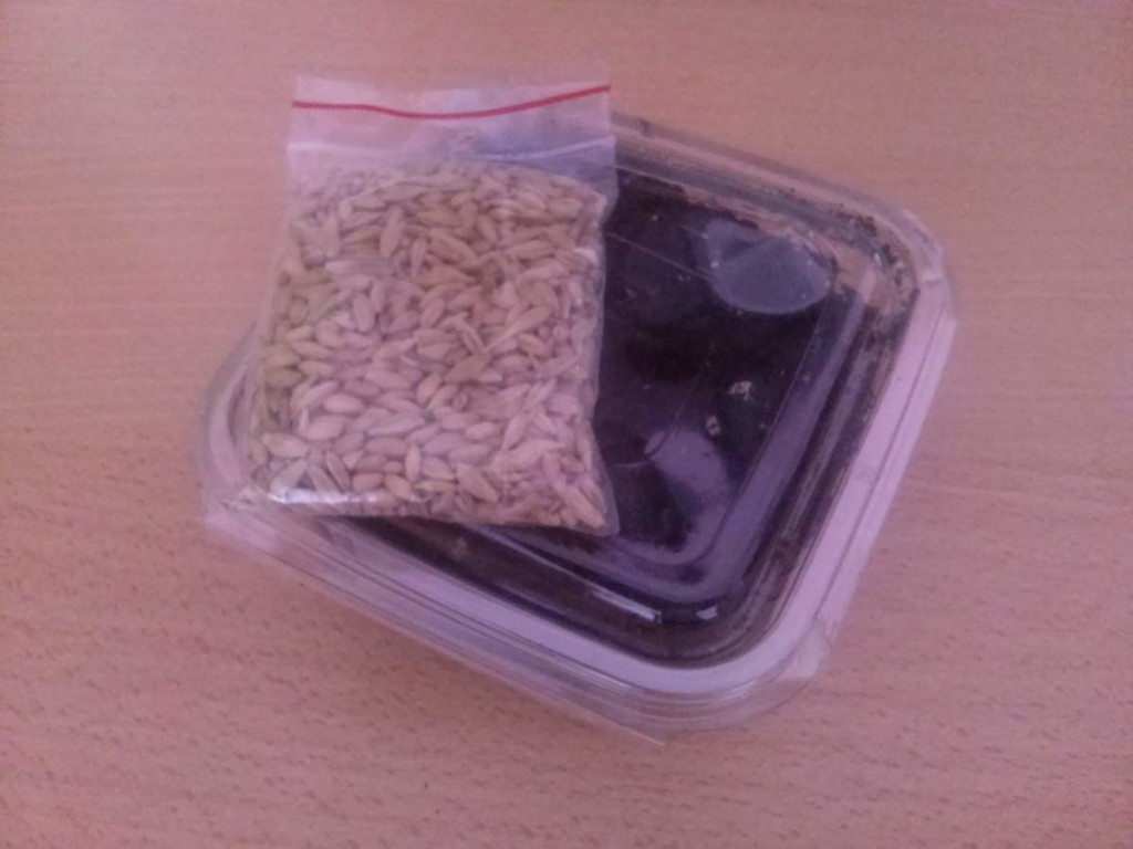 Cat Grass kit