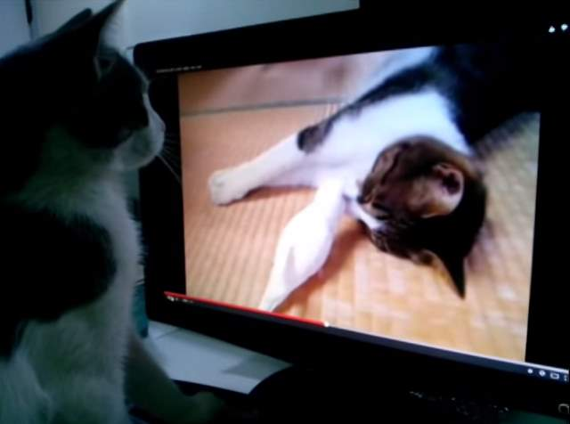 Cat watching 'cat playing with a bird' on youtube