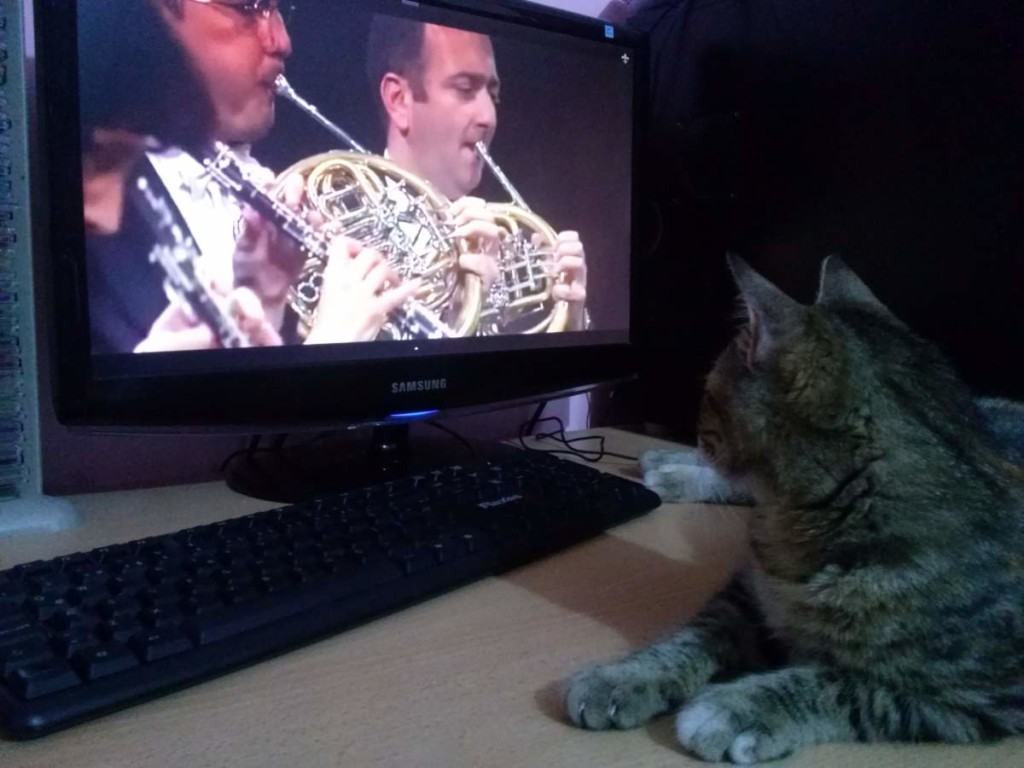 Lotto the cat is listening to the classical music