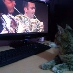 Cats prefer classical music