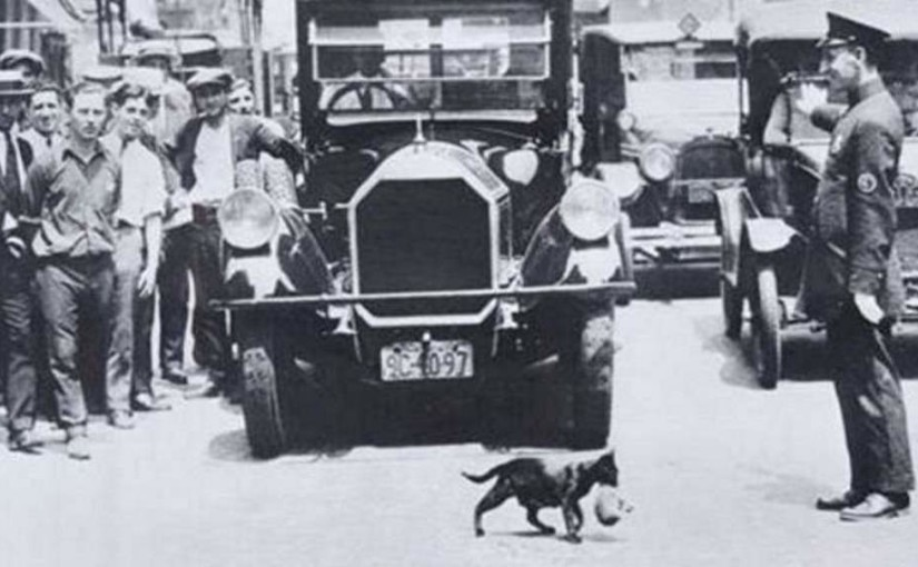 Mother cat stops traffic carrying kitten across busy street (July 1925, New York City)