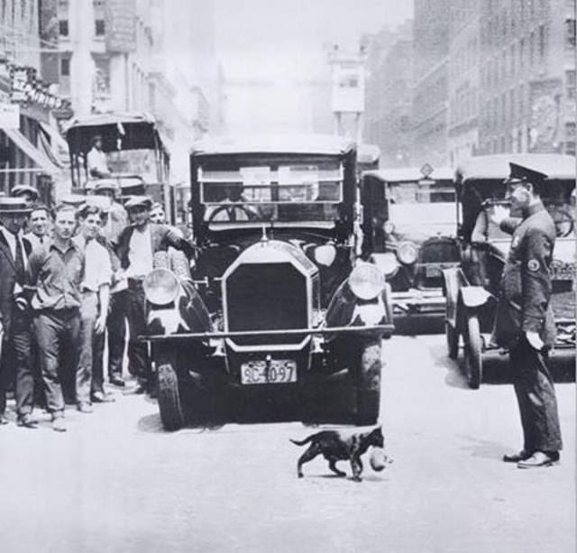 New York: Mother Cat carries kitten across a busy street (1925)