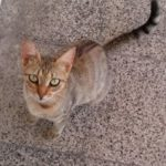 Cats of the Bosphorus University