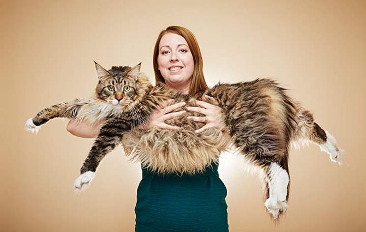 Ludo, the longest domestic cat