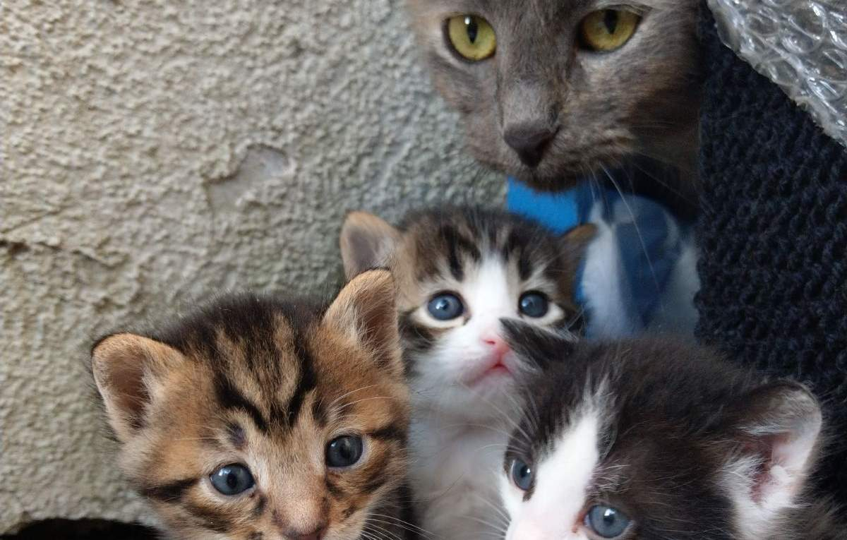 An adorable cat family. April 3, 2018