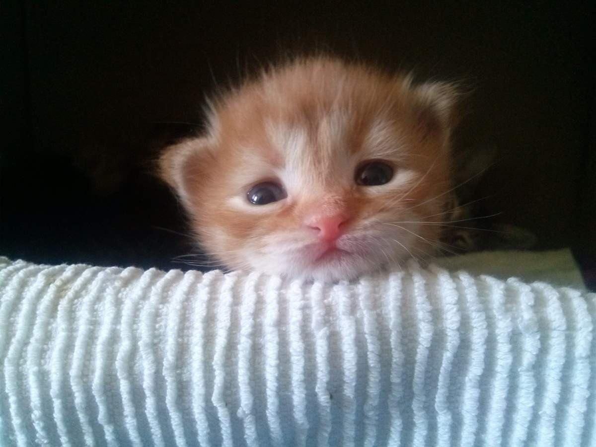 Orange Kitten. April 11, 2015