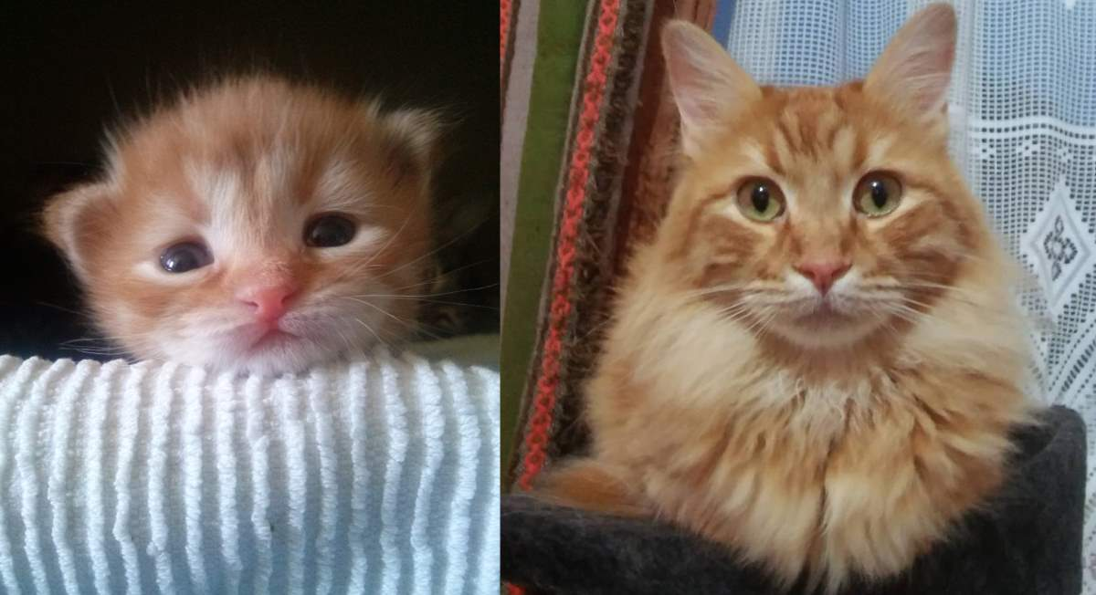 My precious orange cat had a bowel obstruction