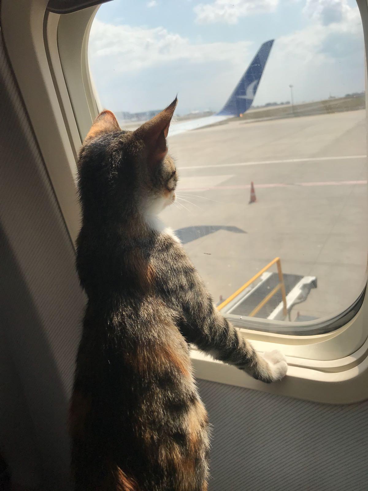 Mishka on the plane