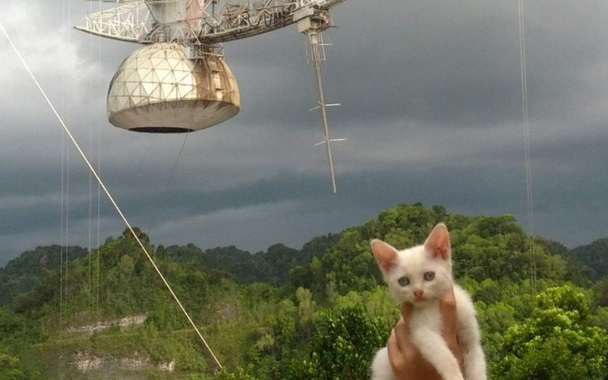 Cats of Arecibo Observatory Need Your Help!