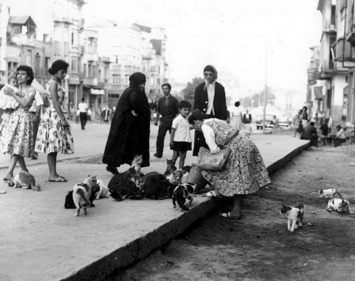 Feeding the cats in Istanbul in 1958.