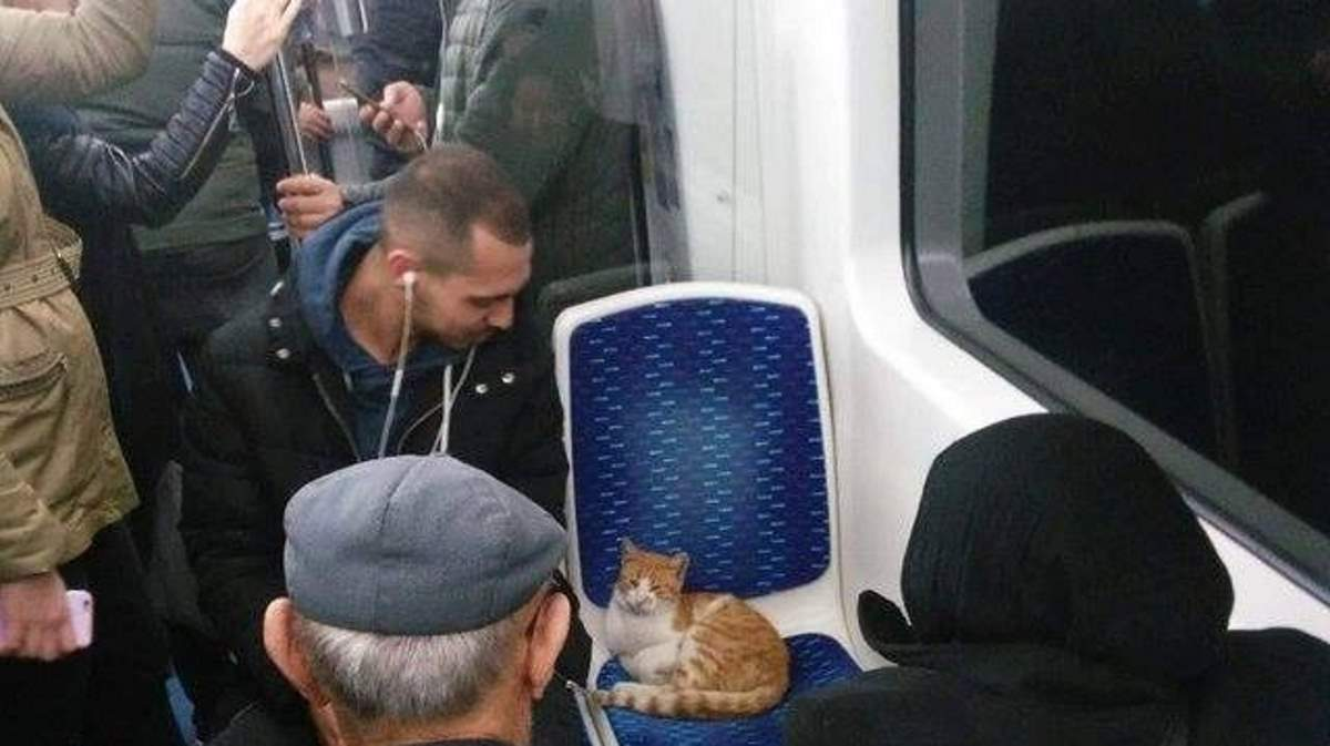 A cat on a train car seat (featured)