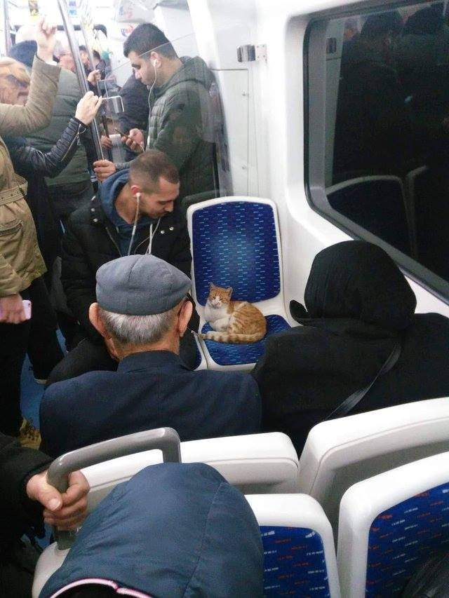A cat on a train car seat