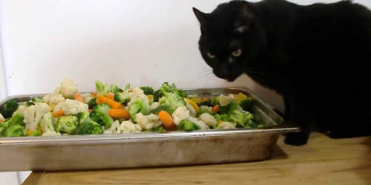 Cat eating vegetables