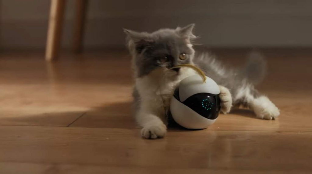 Ebo, the robot companion for your cat