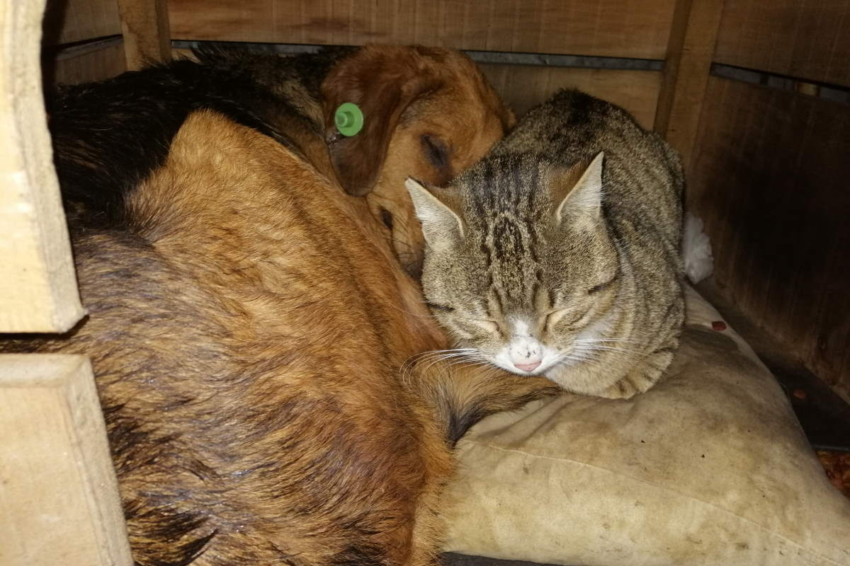 A stray cat and a stray dog sleeping in the same kennel in Istanbul