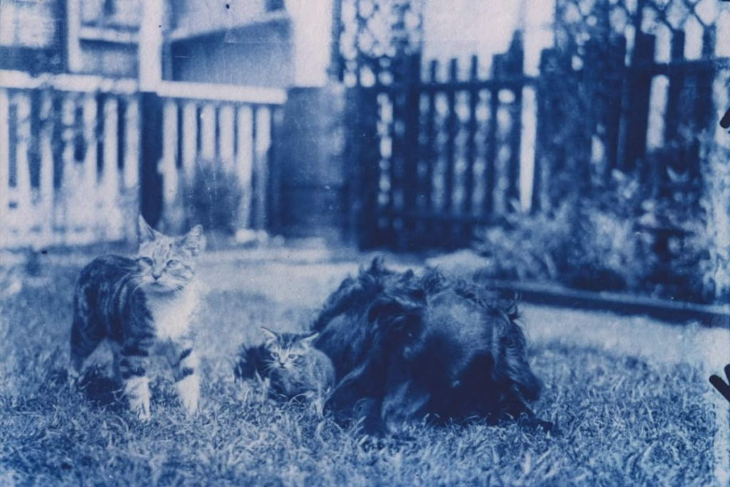 120-year-old cat photos