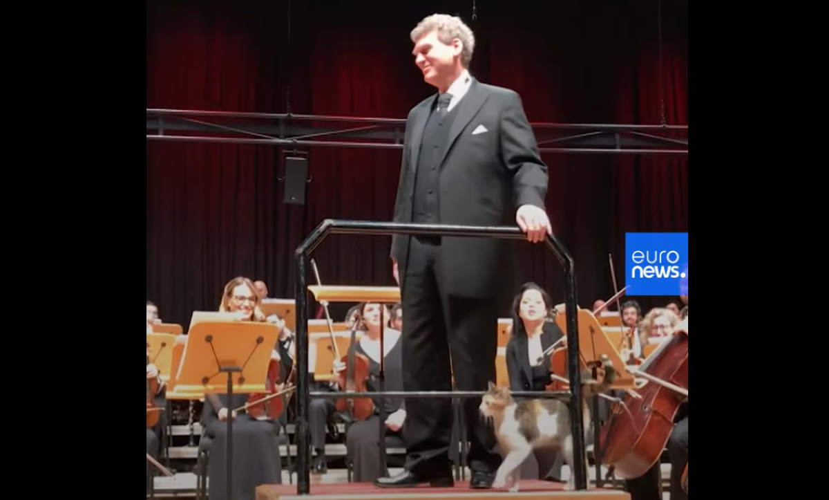 Cat disrupts live classical music concert
