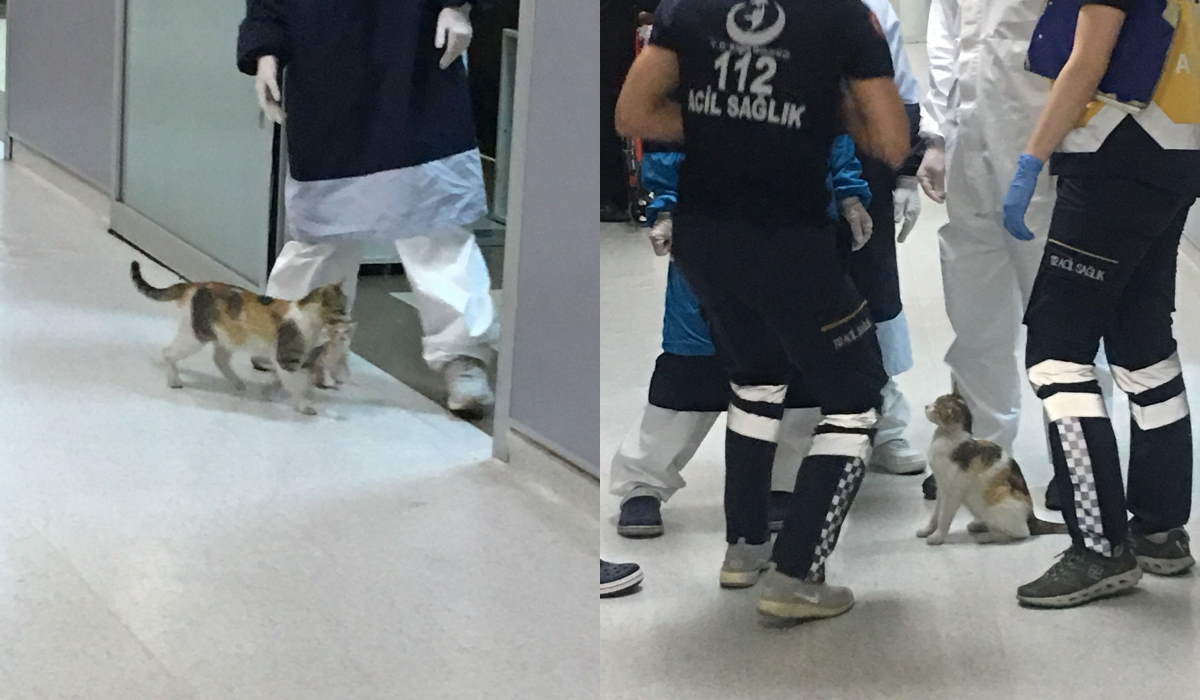 Stray mother cat took her baby to the ER in Istanbul