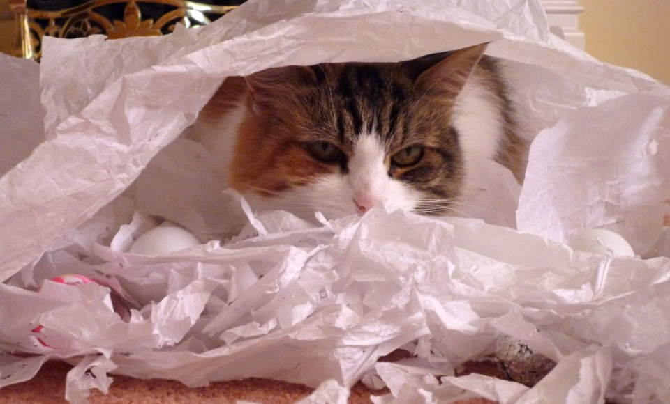Cat shredded toilet paper