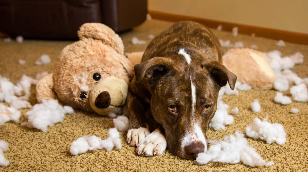 Dog and toy teddy bear